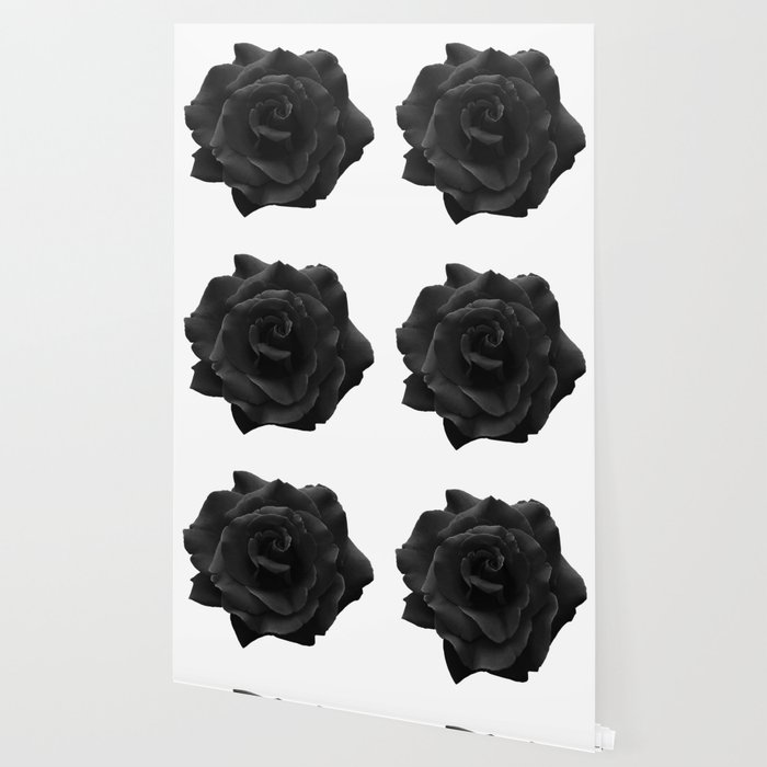 Black Rose On White Single Large High Resolution Wallpaper