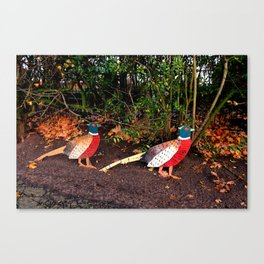 Two Pheasants On The Sidelines Canvas Print