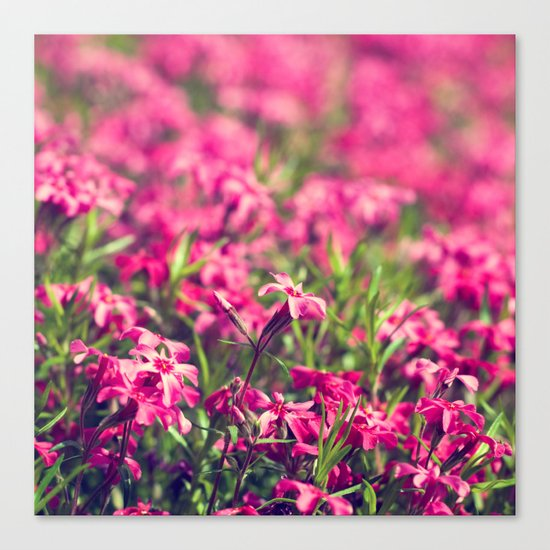 Through the Pink Canvas Print
