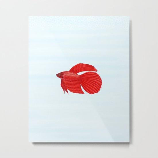 betta splendens red male Metal Print