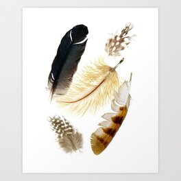 Brown feathers art, Five Feathers design, Tribal Boho style Art Print