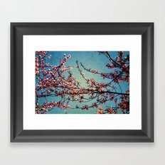 Blossoms--Grunge  Framed Art Print