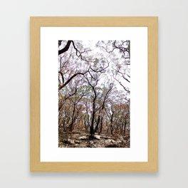 After The Bushfires Have Passed Framed Art Print