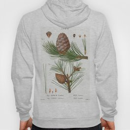 Silver fir (Abies pectinata) from Traite des Arbres et Arbustes que lon cultive en France en pleine Hoody