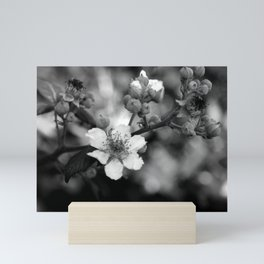 Blackberry Flower Mini Art Print