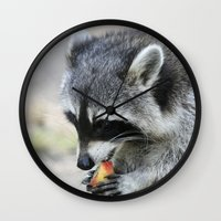 racoon Wall Clocks featuring Racoon 003 by jamfoto
