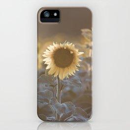 Sunflowers #1 iPhone Case