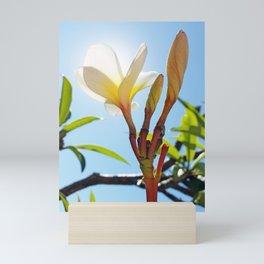 Frangipani Mini Art Print