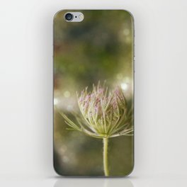 Queen anne's lace 02 iPhone Skin