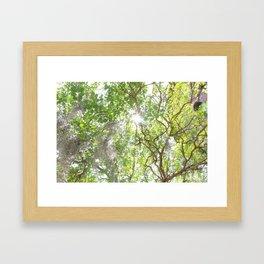 Charleston Moss Framed Art Print
