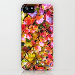 Barberry Fall Colors iPhone Case