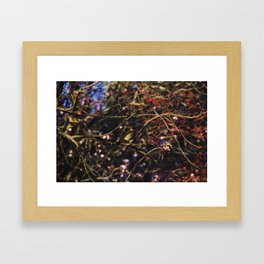 Robin in Cherry Tree Framed Art Print