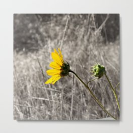 Sunflower Daydream Metal Print