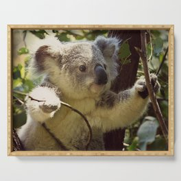 Sweet Koala Baby Serving Tray