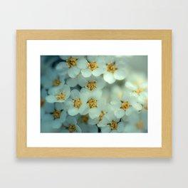 Bridal wreath Framed Art Print