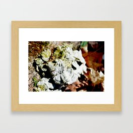 Growth and Patterns Framed Art Print