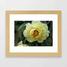 Tokyo Hama Rikyuu Koen Rose 3 Framed Art Print