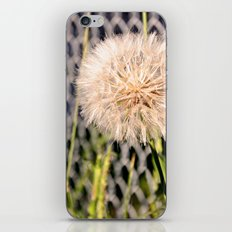 Oversized Puff - Ready to break apart and fly away. iPhone & iPod Skin