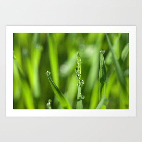 Morning dew 8548 Art Print