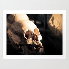 Skull - Mint in Box Art Print