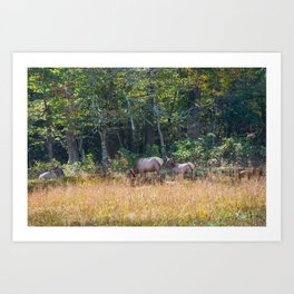 Great Smoky Mountains - Elk Art Print
