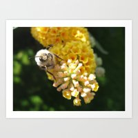 Hello Mr Bumblebee! Art Print