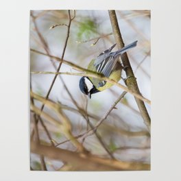 The Great Tit Poster