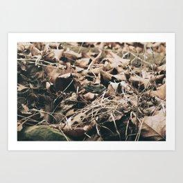 Vintage frog in the leaves Art Print