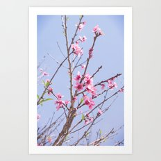 Portuguese Blossoms Art Print