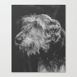 The Irish Wolfhound Canvas Print