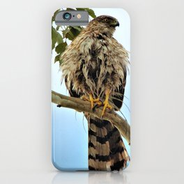 I'm All Wet - Coopers Hawk by Reay of Light iPhone Case