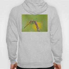 "Yellow dragonfly ""Sympetrum striolatum"" Hoody"