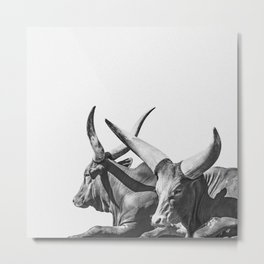 Animal Photography | Ankole-Watusi | Cattle | Bull | Steer | Black and White Metal Print