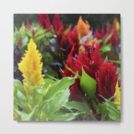 red , yellow, and pink flowers planted in the flower bed. home decor Metal Print