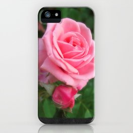 Pink Roses in Anzures 2 Blank P4F0 iPhone Case