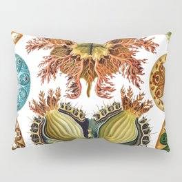 Ernst Haeckel Ascidiae Sea Squirts Pillow Sham