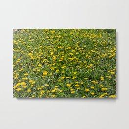Yellow Dandelion Field Fine Art Photography Metal Print