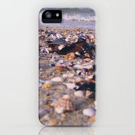 Coquillages iPhone Case