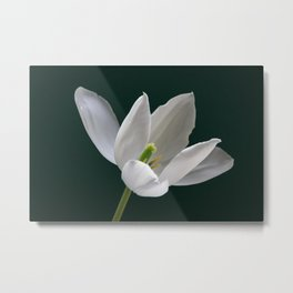White Tulip Minimalism 1 Metal Print