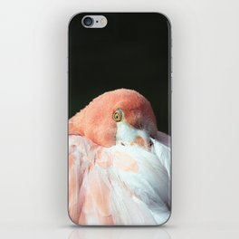 Caribbean Flamingo iPhone Skin