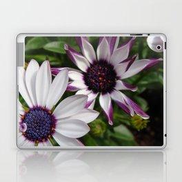 Purple and White Osteospermum Laptop & iPad Skin
