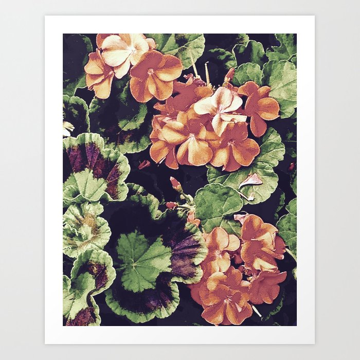 Cottage Kitchen Geraniums Art Print