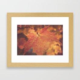 Autumn Bright Framed Art Print