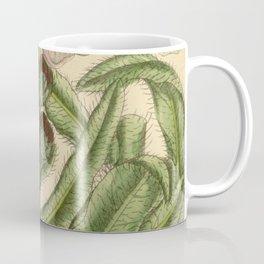 Meconopsis prattii 141 8619 Coffee Mug