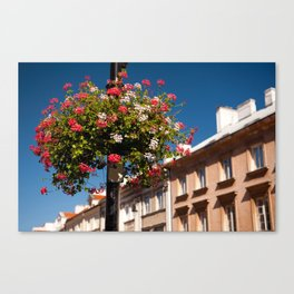 Pink and red Ivy leaved geranium Canvas Print