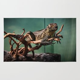Languid Lizard Rug