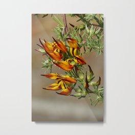 Lotus flower in bloom in the garden Metal Print