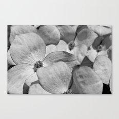 B&W Dogwood Blossoms Canvas Print