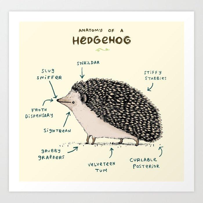 Anatomy of a Hedgehog Kunstdrucke