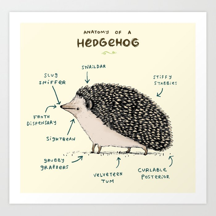 Anatomy Of A Hedgehog Art Print By Sophiecorrigan
